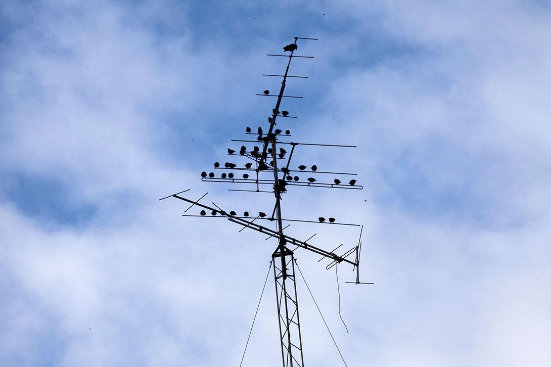 antennas.jpg